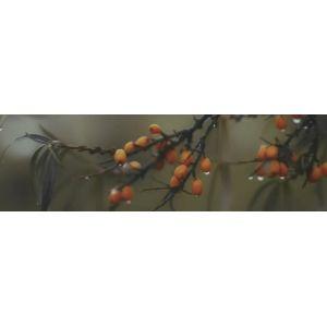Плитка OS/A118/9016 Тракай 6 глянцевый декор  8,5х28,5